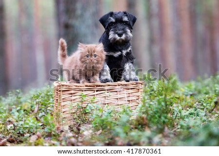 adorable kitten and puppy outdoors together - stock photo