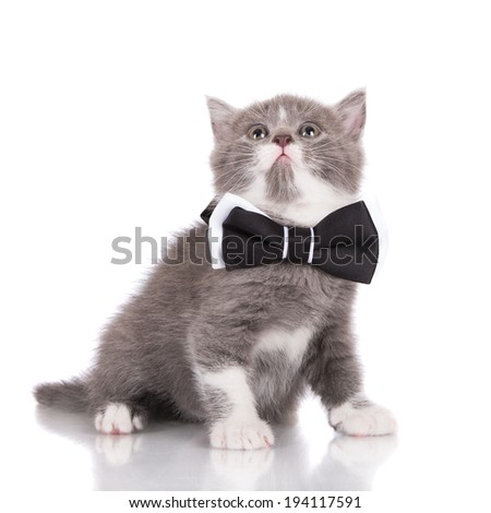 adorable kitten in a bow tie - stock photo
