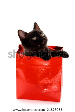 Adorable kitten in a red gift bag isolated on white - stock photo
