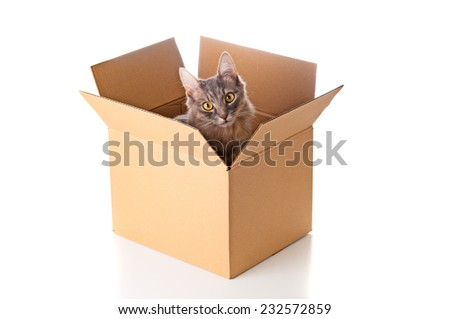 Adorable kitten in cardboard box - stock photo
