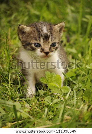 Adorable kitten in grass