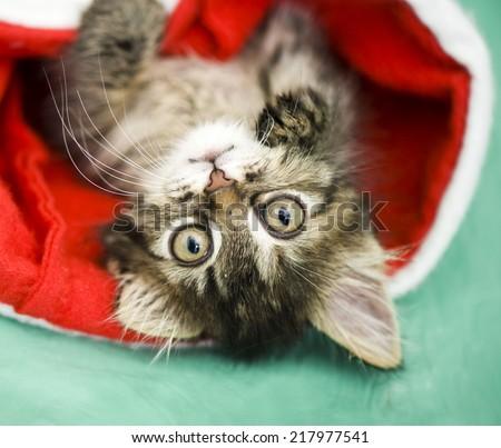 Adorable kitten in santa hat - stock photo