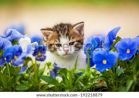 Adorable kitten in the flowers - stock photo