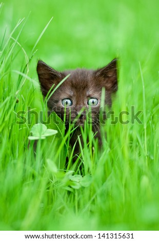 Adorable kitten in the grass - stock photo