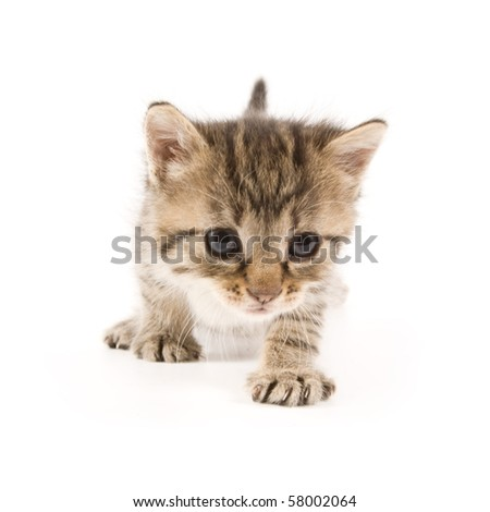 Adorable Kitten Isolated On White