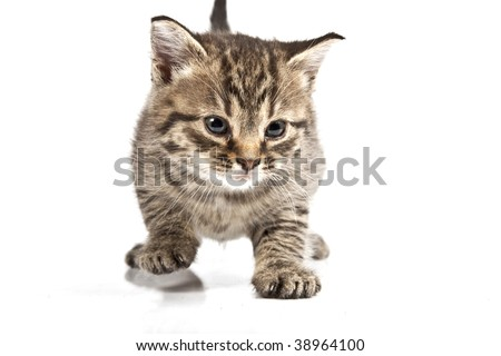 Adorable kitten on white background