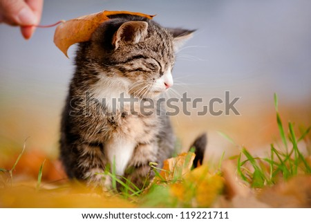 adorable kitten under an autumn leaf - stock photo
