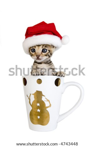 Adorable kitten wearing Santa hat in Christmas mug, isolated on white - stock photo