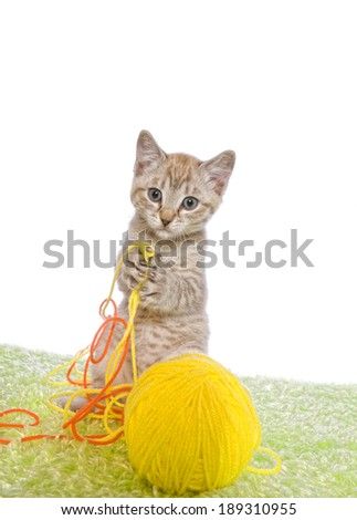 Adorable kitten with big paws playing in orange and yellow yarn isolated on white background - stock photo