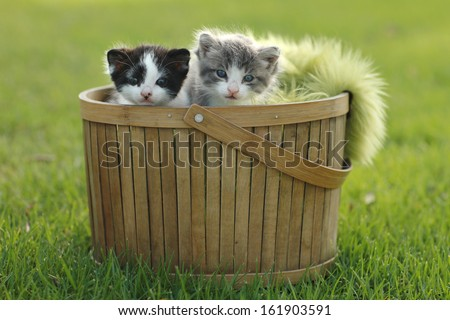 Adorable Kittens in Basket Outdoors - stock photo