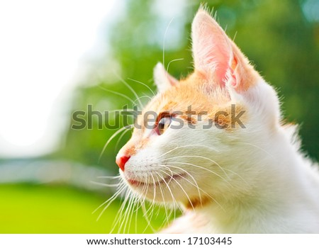adorable kitty - stock photo
