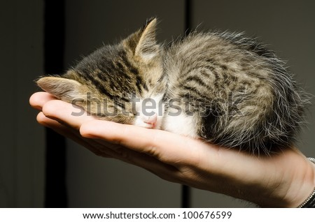 adorable kitty sleep on palm