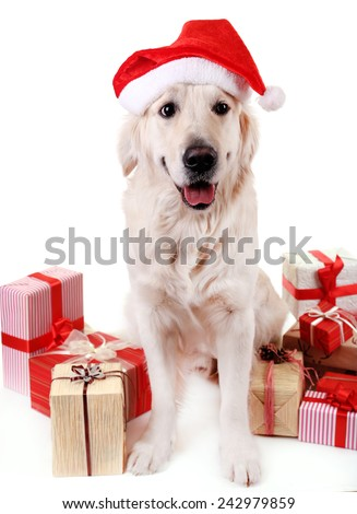 Adorable Labrador in Santa hat sitting with present boxes, isolated on white - stock photo