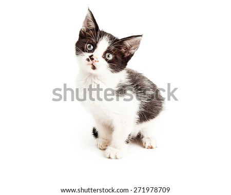 Adorable little black and white color five week old kitten sitting to the side and looking forward - stock photo