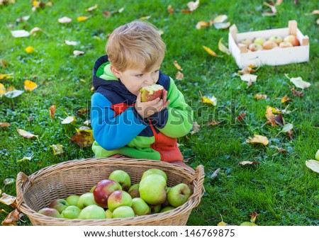 Adorable little boy eating apple in autumn garden - stock photo