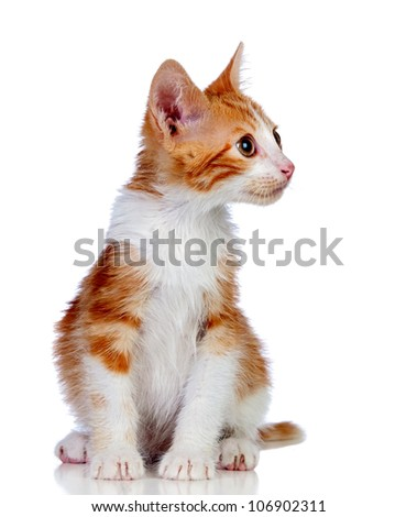 Adorable little cat isolated on white background. - stock photo