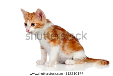 Adorable little cat isolated on white background.
