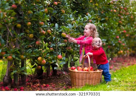 Adorable little girl and baby boy picking fresh ripe apples in fruit orchard. Children pick fruits from apple tree in a basket. Family fun during harvest time on a farm. Kids playing in autumn garden - stock photo