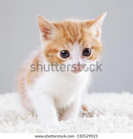 adorable little kitten on white background - stock photo