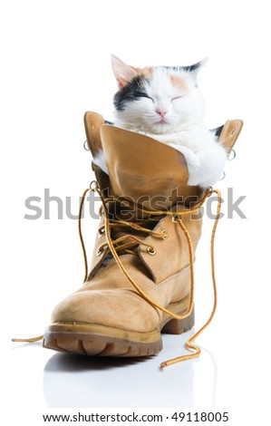 Adorable little kitten sleeping inside a boot isolated on white background - stock photo
