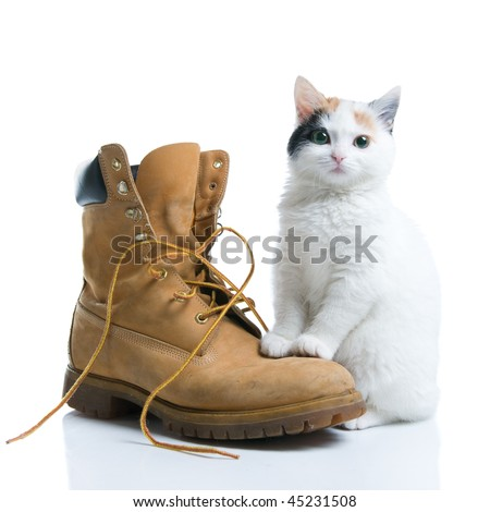 Adorable little kitten standing near a boot isolated on white background - stock photo
