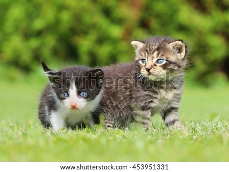 Adorable little kittens - stock photo