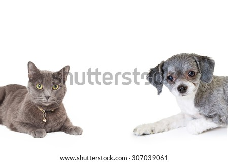 Adorable little mixed breed dog and a grey color cat laying and coming in from the sides of the photo - stock photo