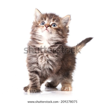 Adorable little playful kitten - stock photo
