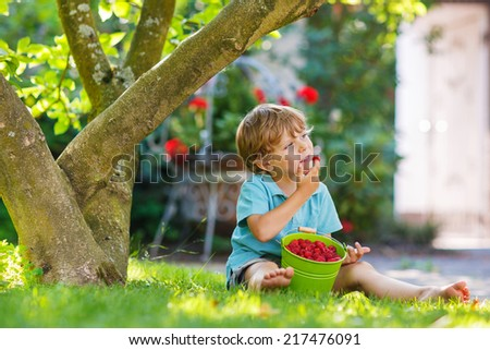 Adorable little preschool boy eating raspberries in home's garden, outdoors. Sitting on ground with big buckets with berries. - stock photo