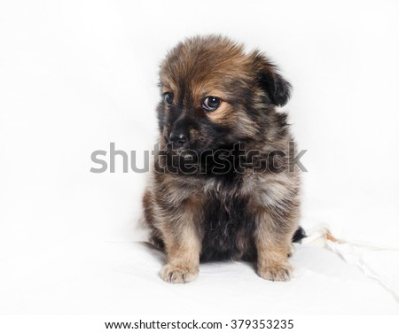 Adorable little puppy dog on light background. - stock photo