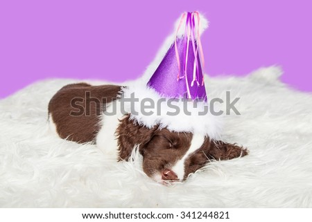 Adorable little puppy sleeping wearing a fuzzy purple party hat - stock photo