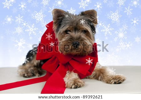 Adorable little puppy with large red ribbon - stock photo