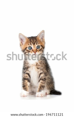 Adorable little tabby kitten sitting - stock photo