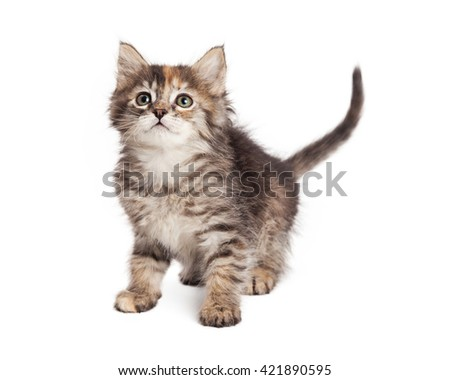 Adorable little tabby kitty on white background - stock photo