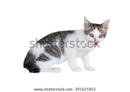Adorable little Thai cat isolated on white background