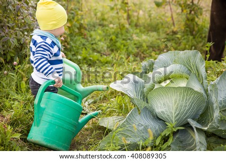 Adorable little toddler boy watering cabbage from a big green watering can and having fun. Child helps in the vegetable garden, outdoors. Countryside life and good harvest. - stock photo