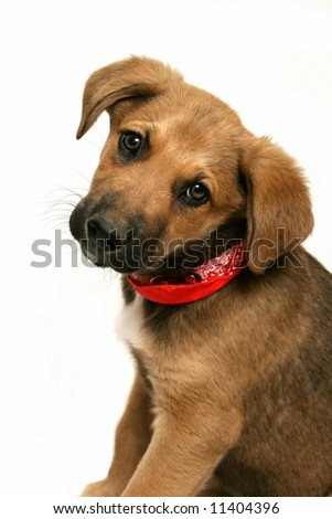 Adorable Mixed Breed Puppy - stock photo