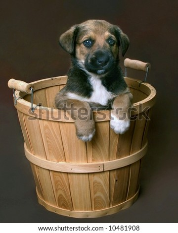Adorable mixed breed puppy in a  basket