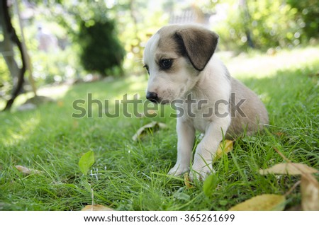 Adorable mixed breed puppy in the grass - stock photo