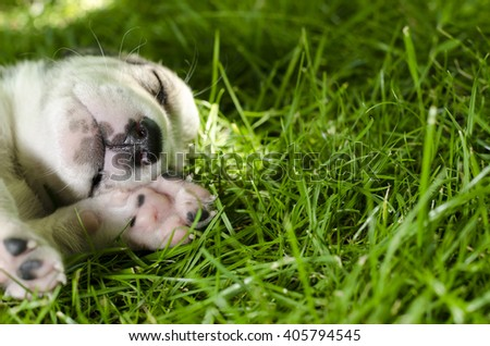 Adorable mixed breed puppy sleeping in the grass. - stock photo