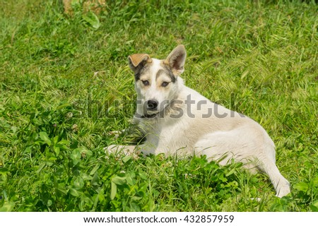 Adorable mixed breed young dog resting in fresh summer grass - stock photo
