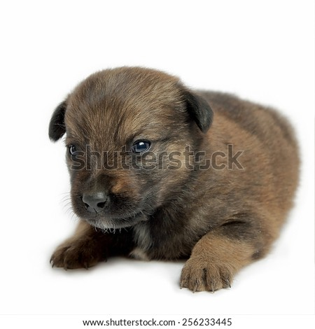 Adorable  mutt puppy dog isolated on white background.