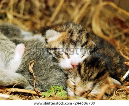 Adorable newborn kitten taking a cat nap - stock photo