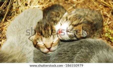 Adorable newborn kittens - stock photo