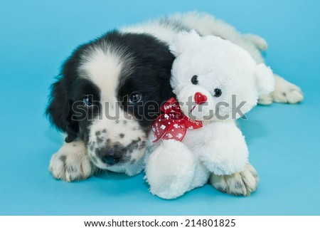 Adorable Newfoundland puppy snuggling with a cute little teddy bear on a blue background. - stock photo
