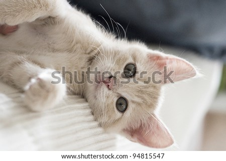 Adorable playful kitten - stock photo