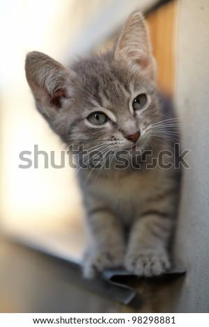 adorable playful kitten - stock photo