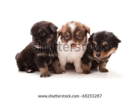 Adorable puppies isolated on white