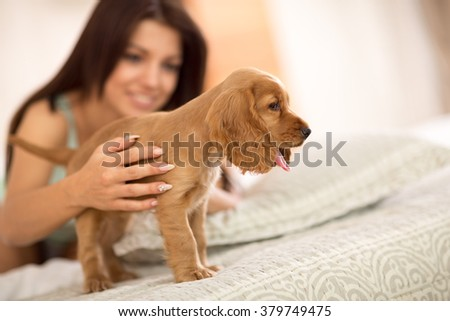 Adorable puppy cocker Spaniel stands on big comfortable bed  - stock photo