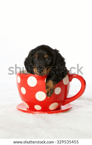 Adorable puppy in studio - stock photo
